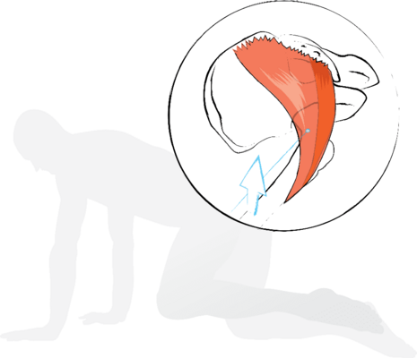 Piriformis and gluteus maximus lie beside each other and partly fulfil similar functions