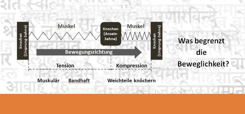 Hüfte und Becken - Stabilität und Flexibilität - AshtangaYoga.info